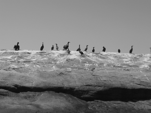 Bird Island, Nova Scotia (J.S. Graboyes/Duck Pie)